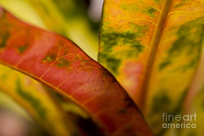 Tropical Leaf Abstract Poster by Ray Laskowitz - Printscapes