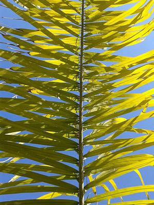 Tropical Palm Leaf Frond  Poster