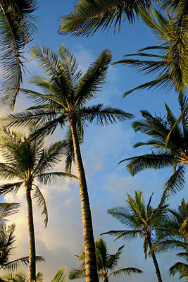 Tropical Palm Trees Of Maui Hawaii Poster