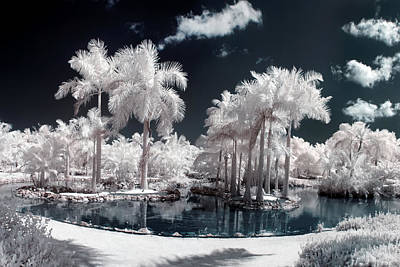 Tropical Paradise Infrared Poster