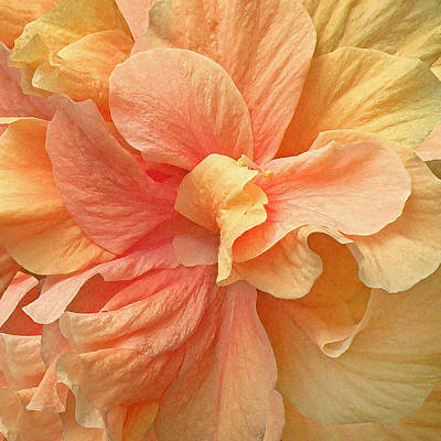Tropical Peach Hibiscus Flower Poster by Deborah Smith