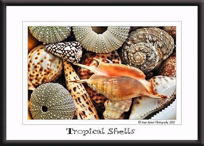 Tropical Shells... Greeting Card Poster