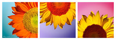 Tropical  Sunflowers Poster by Mark Ashkenazi