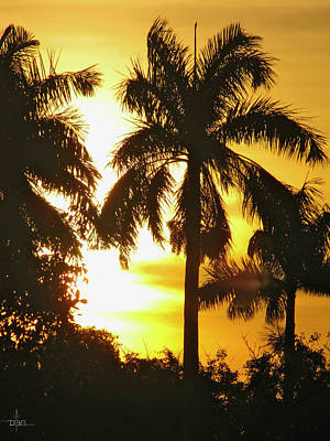Tropical Sunset Palm Poster