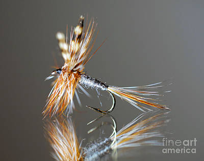 Trout Fly 2 Poster