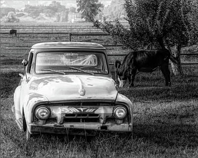 Truck And Cows Living Together Bw Poster