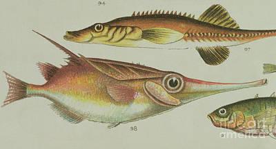 Trumpet Fish Poster