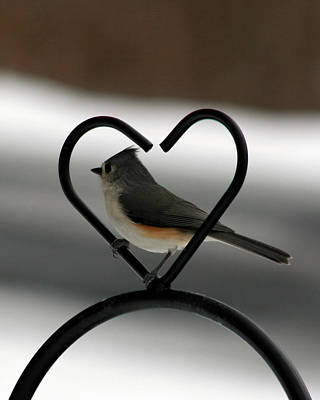Tufted Titmouse In A Heart Poster by George Jones