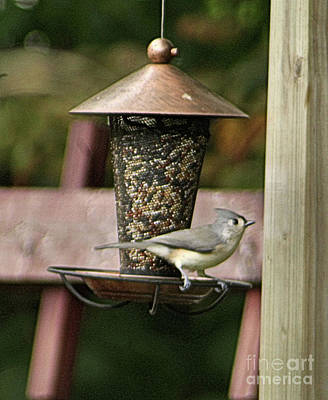 Tufted Titmouse - Southern Indiana Poster