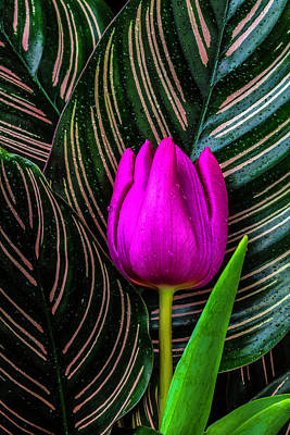Tulip And Calatheas Leaves Poster by Garry Gay