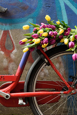Tulip Bike Poster by Phyllis Peterson
