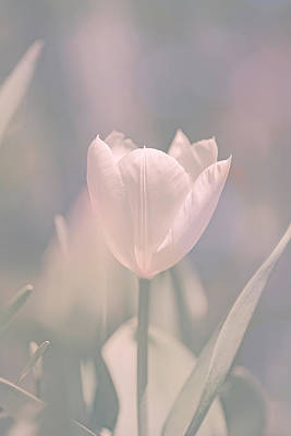 Poster featuring the photograph Tulip by Bob Orsillo