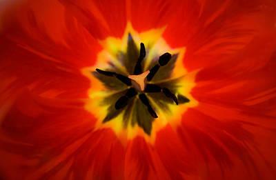 Tulip Explosion Kaleidoscope Poster