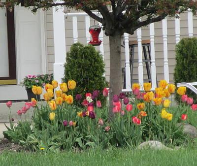 Tulip Garden Poster by Kay Novy