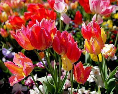 Tulip Garden Poster by Rona Black