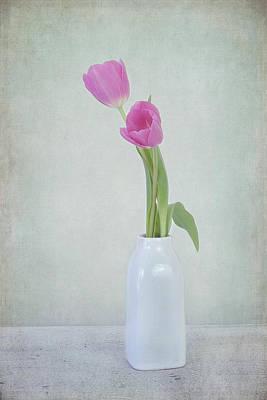 Tulip Love Poster by Kim Hojnacki