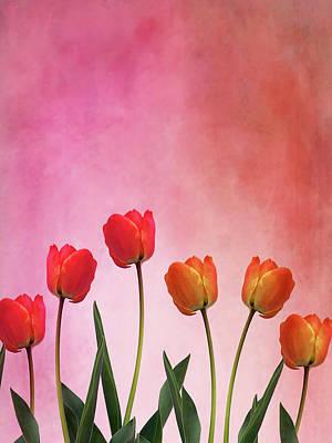 Tulip Six Poster by Mark Rogan