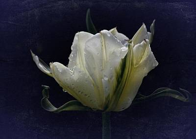 Poster featuring the photograph Tulip Tears by Richard Cummings