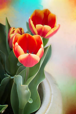 Tulip Time Poster by Lynn Bauer