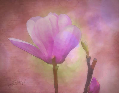 Tulip Tree Bloom And Bud Poster by Larry Bishop