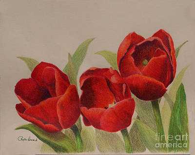 Poster featuring the drawing Tulip Trio by Phyllis Howard