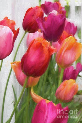 Tulips Poster by A New Focus Photography