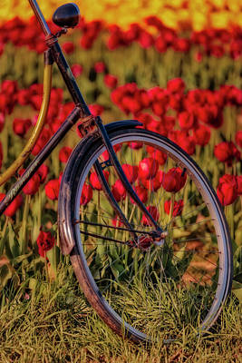 Poster featuring the photograph Tulips And Bicycle by Susan Candelario