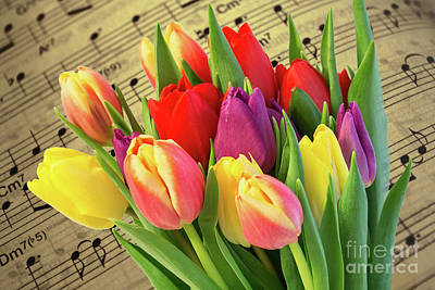 Tulips And Music Poster by Steve Purnell