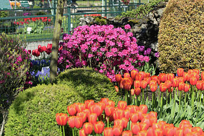 Tulips And Rhodies Poster