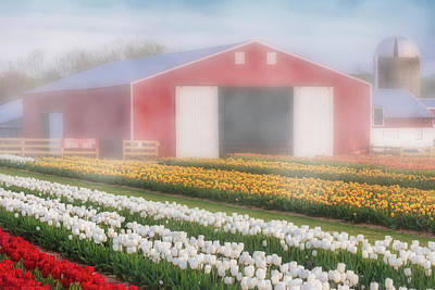 Poster featuring the photograph Tulips, Fog And Barn by Susan Candelario