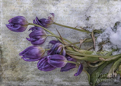 Poster featuring the mixed media Tulips Frozen by Terry Rowe