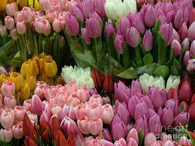 Poster featuring the photograph Tulips Galore by Terri Thompson