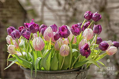 Poster featuring the photograph Tulips In A Bucket by Patricia Hofmeester