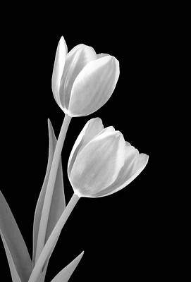 Tulips In Black And White Poster