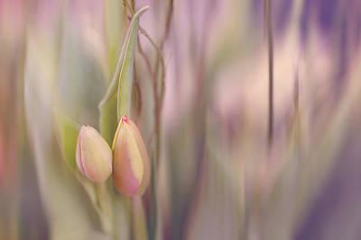 Tulips In Pastel Poster by Cindy Grundsten
