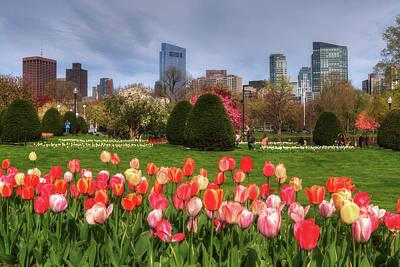 Tulips In The Boston Public Garden In Spring Poster by Joann Vitali