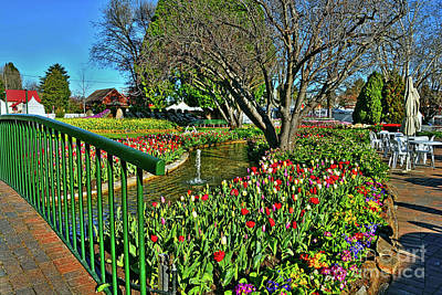 Tulips In The Park By Kaye Menner Poster by Kaye Menner