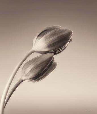Tulips Monochrome Poster by Wim Lanclus