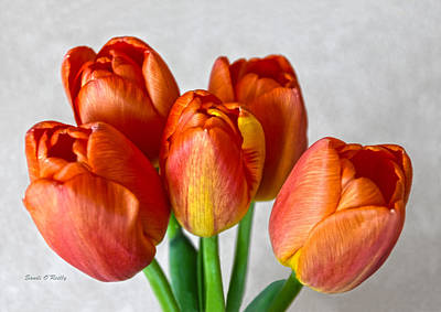 Tulips Showing Off Poster by Sandi OReilly