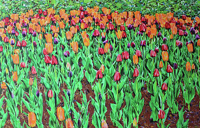 Poster featuring the painting Tulips Tulips Everywhere by Deborah Boyd