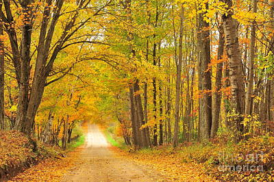 Tunneling Into Autumn Poster by Terri Gostola