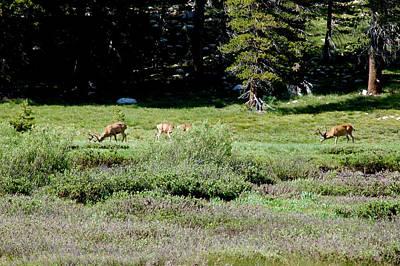 Tuolumne Meadows Yosemite Mule Deer Meadows Poster