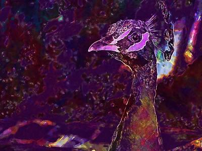 Turkey Royal Birds Peacock  Poster