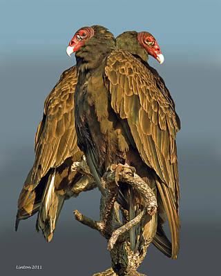 Turkey Vultures 2 Poster