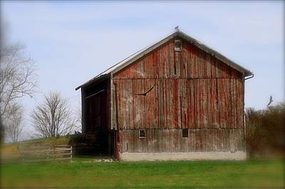 Turkey Vultures Hovering Around The Barn Poster