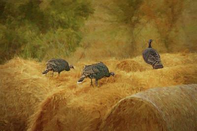 Turkeys In The Straw Poster by Nikolyn McDonald