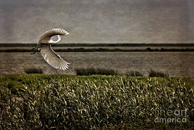 Turning In Flight Poster by Tom Gari Gallery-Three-Photography