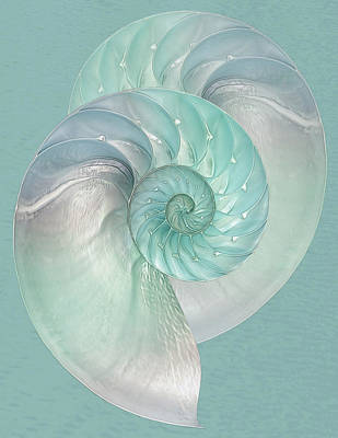 Turquoise Nautilus Pair Poster by Gill Billington