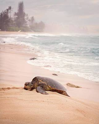 Poster featuring the photograph Turtle Beach by Heather Applegate