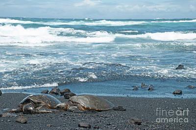 Turtles On Black Sand Beach Poster